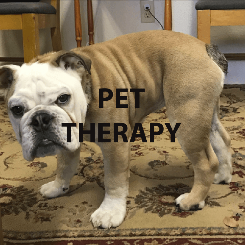 pet-therapy-copy